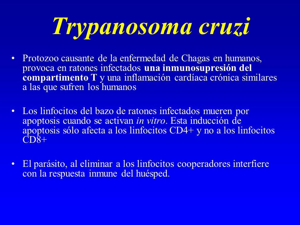 Trypanosoma cruzi Protozoo causante de la enfermedad de Chagas en humanos, provoca en ratones infectados una inmunosupresión del compartimento T y una
