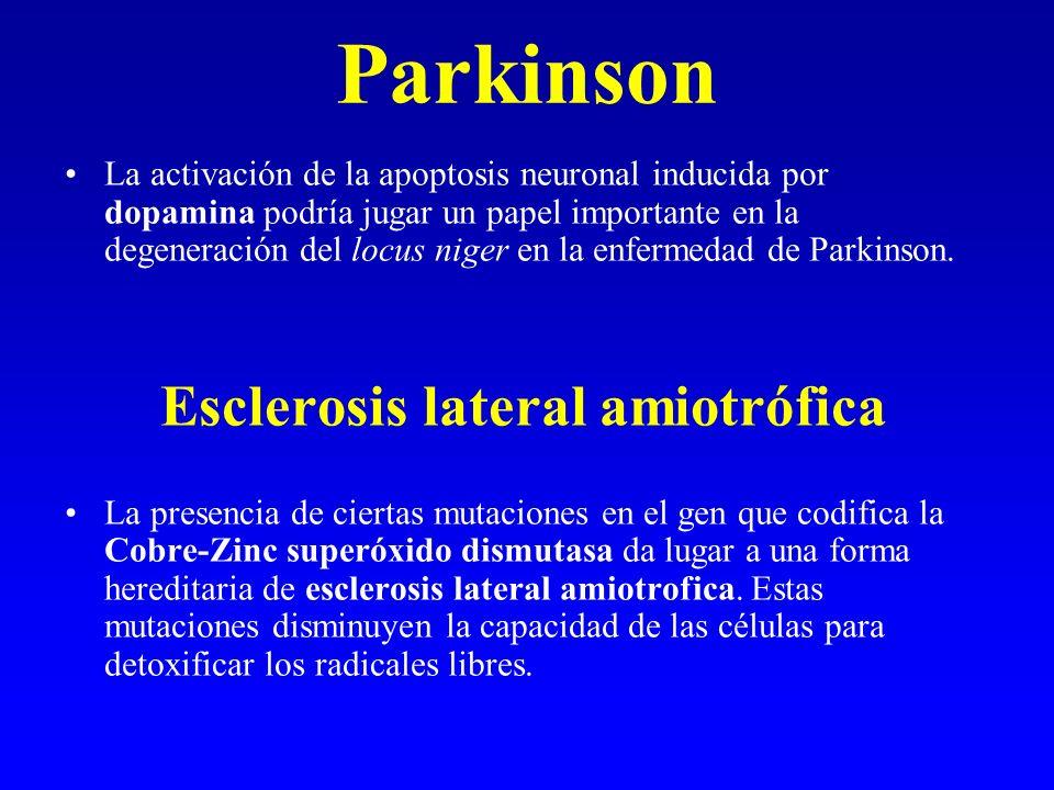 Parkinson La activación de la apoptosis neuronal inducida por dopamina podría jugar un papel importante en la degeneración del locus niger en la enfer