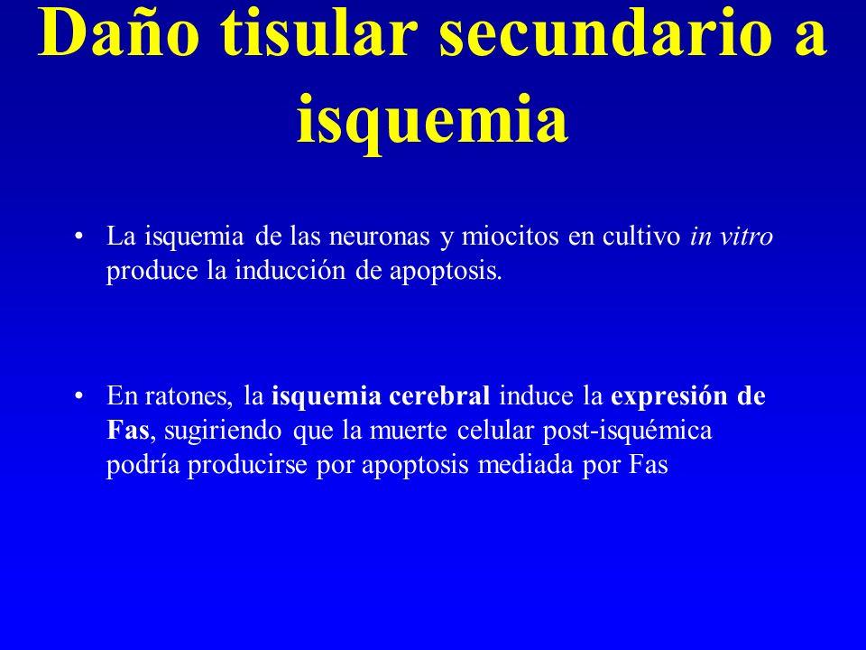 Daño tisular secundario a isquemia La isquemia de las neuronas y miocitos en cultivo in vitro produce la inducción de apoptosis. En ratones, la isquem