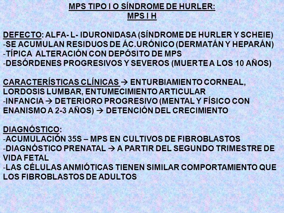 MPS TIPO I O SÍNDROME DE HURLER: MPS I H DEFECTO: ALFA- L- IDURONIDASA (SÍNDROME DE HURLER Y SCHEIE) -SE ACUMULAN RESIDUOS DE ÁC.URÓNICO (DERMATÁN Y H