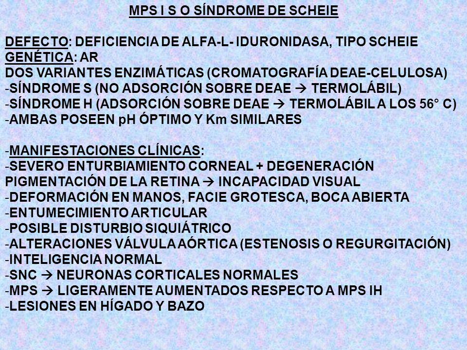 MPS I S O SÍNDROME DE SCHEIE DEFECTO: DEFICIENCIA DE ALFA-L- IDURONIDASA, TIPO SCHEIE GENÉTICA: AR DOS VARIANTES ENZIMÁTICAS (CROMATOGRAFÍA DEAE-CELUL