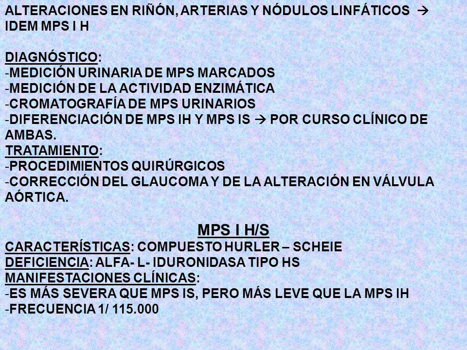 ALTERACIONES EN RIÑÓN, ARTERIAS Y NÓDULOS LINFÁTICOS IDEM MPS I H DIAGNÓSTICO: -MEDICIÓN URINARIA DE MPS MARCADOS -MEDICIÓN DE LA ACTIVIDAD ENZIMÁTICA