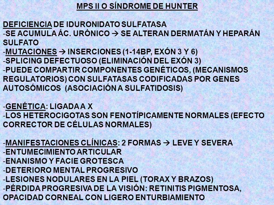 MPS II O SÍNDROME DE HUNTER DEFICIENCIA DE IDURONIDATO SULFATASA -SE ACUMULA ÁC. URÓNICO SE ALTERAN DERMATÁN Y HEPARÁN SULFATO -MUTACIONES INSERCIONES