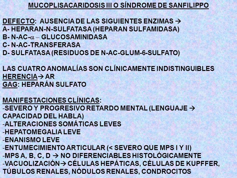 MUCOPLISACARIDOSIS III O SÍNDROME DE SANFILIPPO DEFECTO: AUSENCIA DE LAS SIGUIENTES ENZIMAS A- HEPARAN-N-SULFATASA (HEPARAN SULFAMIDASA) B- N-AC- GLUC