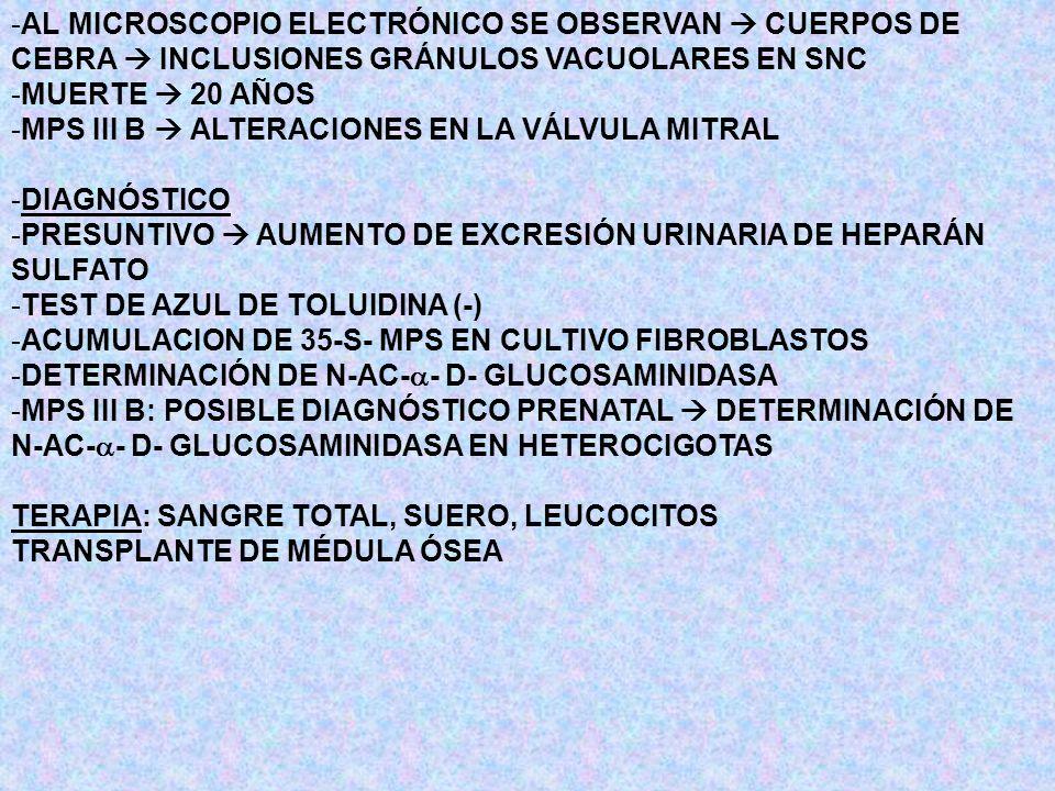 -AL MICROSCOPIO ELECTRÓNICO SE OBSERVAN CUERPOS DE CEBRA INCLUSIONES GRÁNULOS VACUOLARES EN SNC -MUERTE 20 AÑOS -MPS III B ALTERACIONES EN LA VÁLVULA