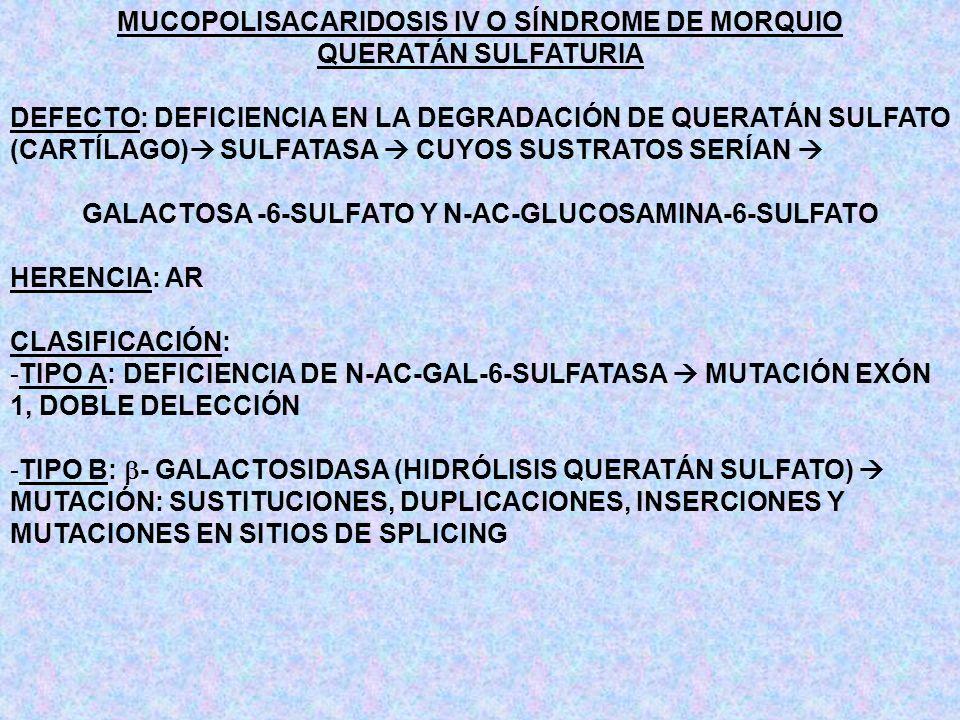 MUCOPOLISACARIDOSIS IV O SÍNDROME DE MORQUIO QUERATÁN SULFATURIA DEFECTO: DEFICIENCIA EN LA DEGRADACIÓN DE QUERATÁN SULFATO (CARTÍLAGO) SULFATASA CUYO
