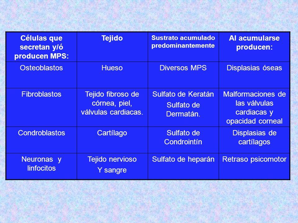 TipoNombreEnzima Deficiente Grado De Afectació n Del SNC Grado De Afectaci ón Del Tejido Óseo Heren cia Sustrato Acumulado Rasgos Característicos Rasgos Morfológicos MPS I H MPS I S Hurler Scheie Alfa-L- Iduronidasa ++++ - ++++ + AR Sulfato de Dermatán y Sulfato de Heparán (menos sulfatados ) Hurler: enanismo, jorobados; opacidad corneal +++ Generalmente mueren durante la niñez.