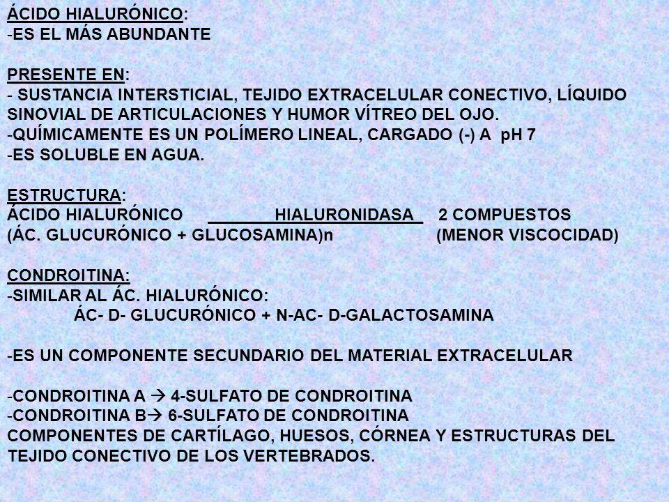 ÁCIDO HIALURÓNICO: -ES EL MÁS ABUNDANTE PRESENTE EN: - SUSTANCIA INTERSTICIAL, TEJIDO EXTRACELULAR CONECTIVO, LÍQUIDO SINOVIAL DE ARTICULACIONES Y HUM