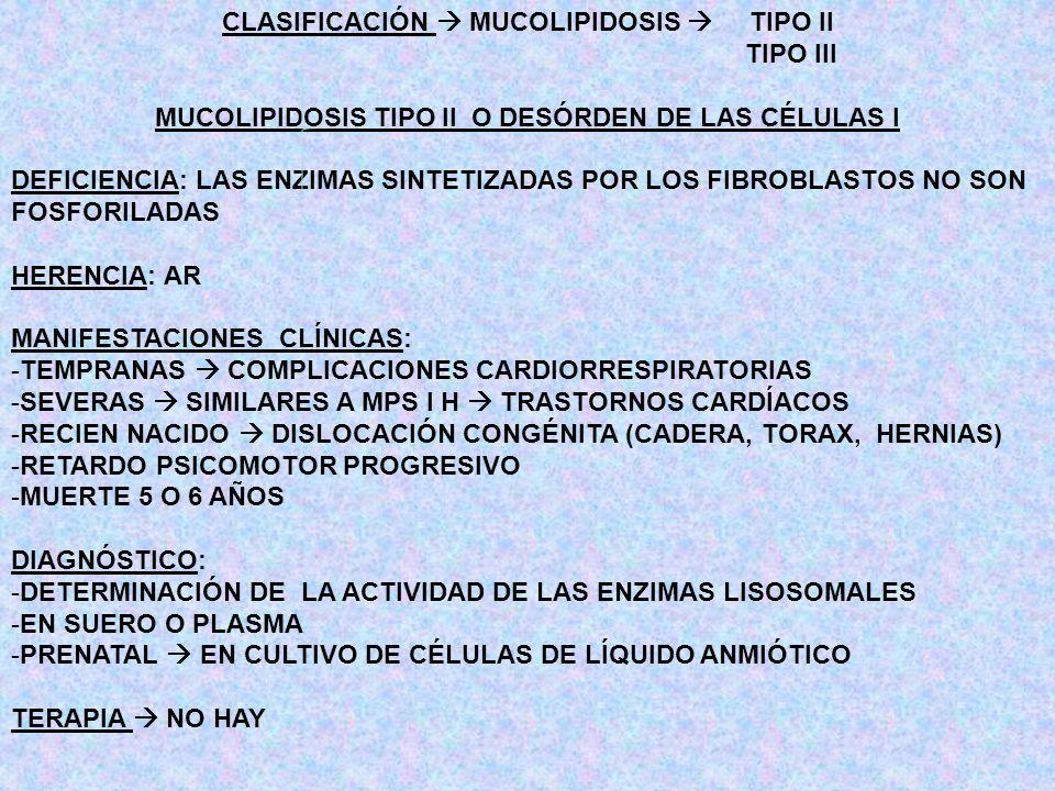 CLASIFICACIÓN MUCOLIPIDOSIS TIPO II TIPO III MUCOLIPIDOSIS TIPO II O DESÓRDEN DE LAS CÉLULAS I DEFICIENCIA: LAS ENZIMAS SINTETIZADAS POR LOS FIBROBLAS