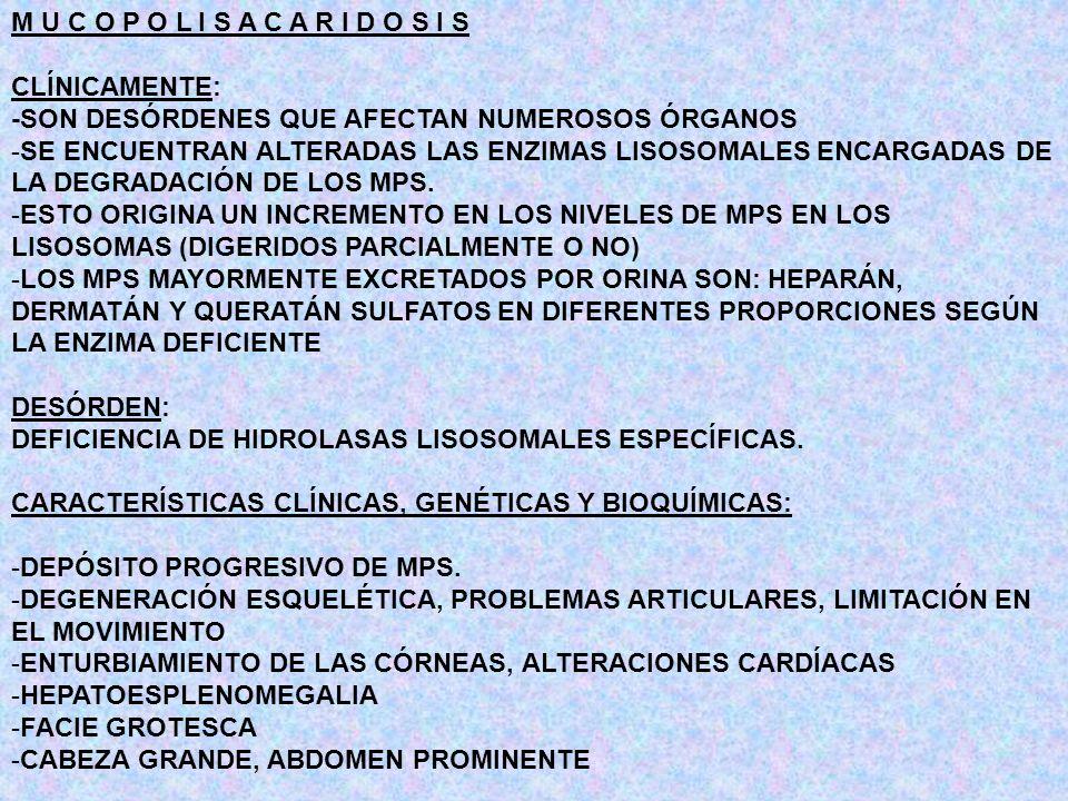 MUCOLIPIDOSIS -DEFICIENCIA DE HIDROLASAS LISOSOMALES (TEJIDOS Y FIBROBLASTOS), NECESARIAS PARA EL CATABOLISMO DE MPS -SE OBSERVA EL AUMENTO DE LOS NIVELES DE HIDROLASAS LISOSOMALES EN FLUÍDOS CORPORALES -FALLAN LAS MODIFICACIONES POSTRADUCCIONALES DE LAS ENZIMAS (RESIDUOS MANOSA-6-FOSFATO) -LAS ENZIMAS QUE SE ENCUENTRAN ELEVADAS SON: L- IDURONIDASA -IDURONATO SULFATASA - GLUCURONIDASA -N-AC- HEXOSAMINIDASA -ARIL SULFATASA MANOSIDASA L-FUCOSIDASA FUNCIÓN CATABOLISMO DE MPS, GLICOLÍPIDOS Y GLICOPROTEÍNAS LAS ENZIMAS QUE SE ENCUENTRAN NORMALES SON: - GLUCOSIDASA -FOSFATASA ÁCIDA