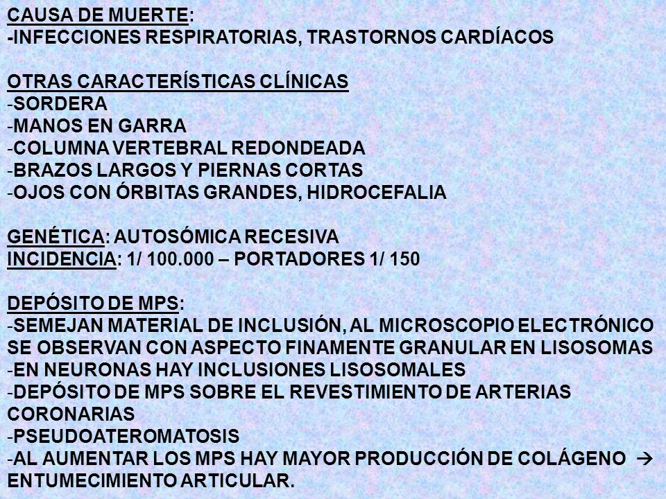 CLASIFICACIÓN MUCOLIPIDOSIS TIPO II TIPO III MUCOLIPIDOSIS TIPO II O DESÓRDEN DE LAS CÉLULAS I DEFICIENCIA: LAS ENZIMAS SINTETIZADAS POR LOS FIBROBLASTOS NO SON FOSFORILADAS HERENCIA: AR MANIFESTACIONES CLÍNICAS: -TEMPRANAS COMPLICACIONES CARDIORRESPIRATORIAS -SEVERAS SIMILARES A MPS I H TRASTORNOS CARDÍACOS -RECIEN NACIDO DISLOCACIÓN CONGÉNITA (CADERA, TORAX, HERNIAS) -RETARDO PSICOMOTOR PROGRESIVO -MUERTE 5 O 6 AÑOS DIAGNÓSTICO: -DETERMINACIÓN DE LA ACTIVIDAD DE LAS ENZIMAS LISOSOMALES -EN SUERO O PLASMA -PRENATAL EN CULTIVO DE CÉLULAS DE LÍQUIDO ANMIÓTICO TERAPIA NO HAY