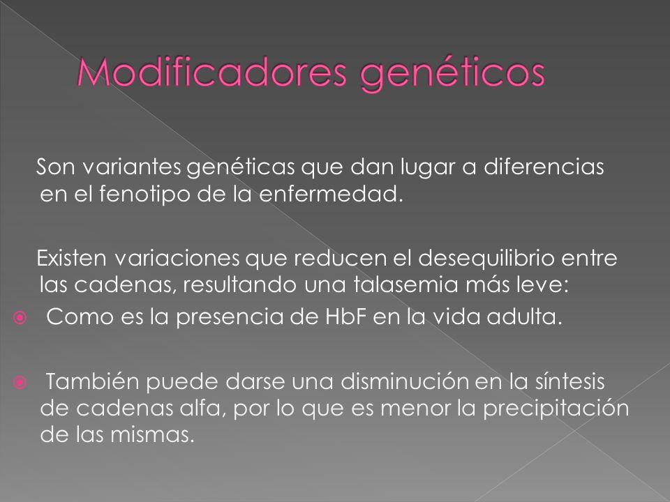 Son variantes genéticas que dan lugar a diferencias en el fenotipo de la enfermedad. Existen variaciones que reducen el desequilibrio entre las cadena