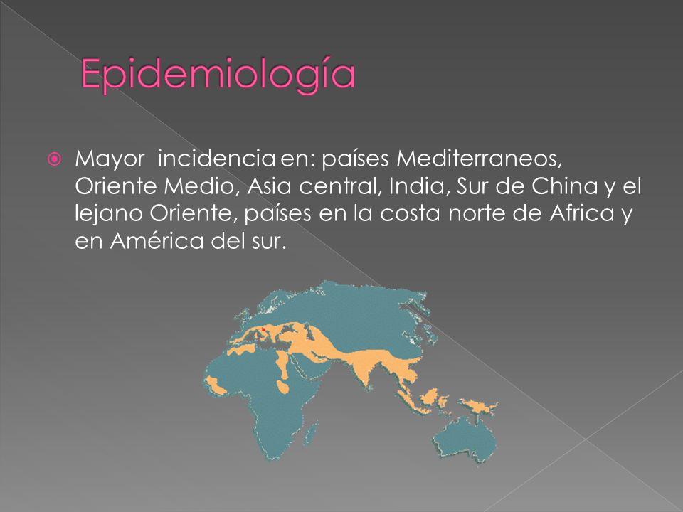 Mayor incidencia en: países Mediterraneos, Oriente Medio, Asia central, India, Sur de China y el lejano Oriente, países en la costa norte de Africa y