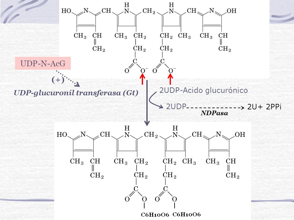 2UDP-Acido glucurónico UDP-glucuronil transferasa (Gt) 2UDP 2U+ 2PPi NDPasa UDP-N-AcG (+)