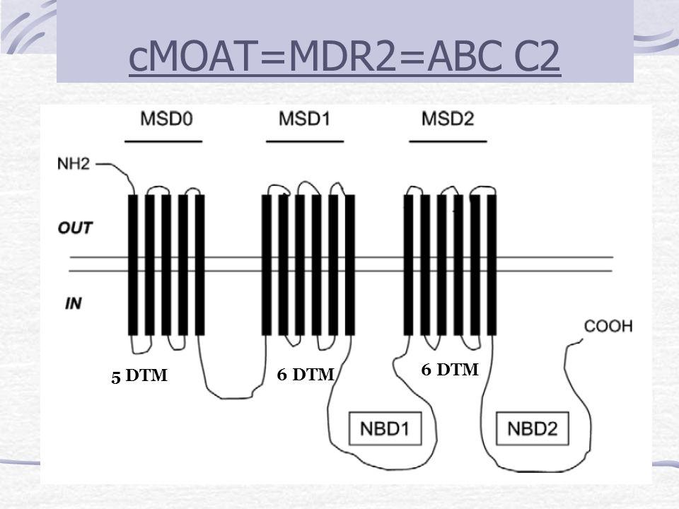 cMOAT=MDR2=ABC C2 5 DTM 6 DTM