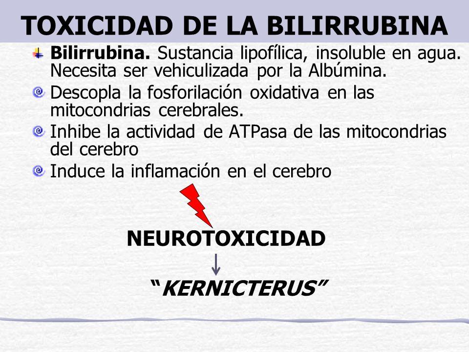 TOXICIDAD DE LA BILIRRUBINA Bilirrubina. Sustancia lipofílica, insoluble en agua. Necesita ser vehiculizada por la Albúmina. Descopla la fosforilación