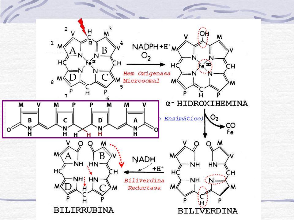 Síndrome de Crigler-Najjar Diagnóstico Diferencial de los Síndromes de Crigler-Najjar TIPO ITIPO II Actividad de UDP-Gt No detectableMarcadamente disminuida Bilirrubina en BilisNo Conjugada y B(AG) (trazas) B(AG) 2 (trazas) Efectos de Fenobarbital sobre Bilirr.