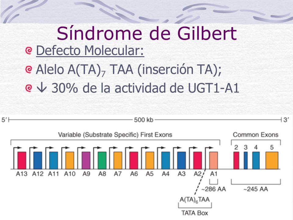 Síndrome de Gilbert Defecto Molecular: Alelo A(TA) 7 TAA (inserción TA); 30% de la actividad de UGT1-A1
