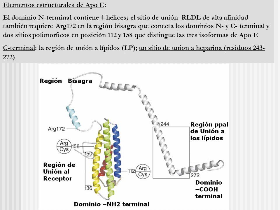 Elementos estructurales de Apo E: El dominio N-terminal contiene 4-hélices; el sitio de unión RLDL de alta afinidad también requiere Arg172 en la regi