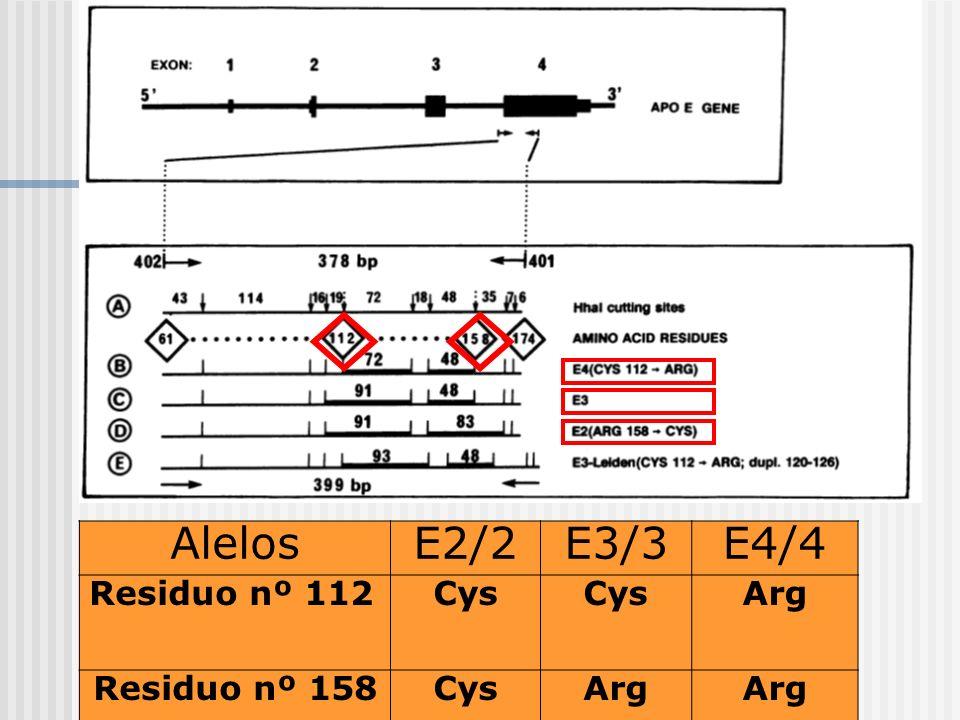 APOPROTEÍNA E: ESTRUCTURA Y FUNCIÓN AlelosE2/2E3/3E4/4 Residuo nº 112Cys Arg Residuo nº 158CysArg