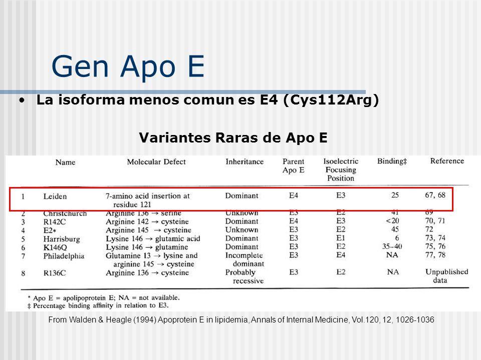 Variantes Raras de Apo E La isoforma menos comun es E4 (Cys112Arg) From Walden & Heagle (1994) Apoprotein E in lipidemia, Annals of Internal Medicine,