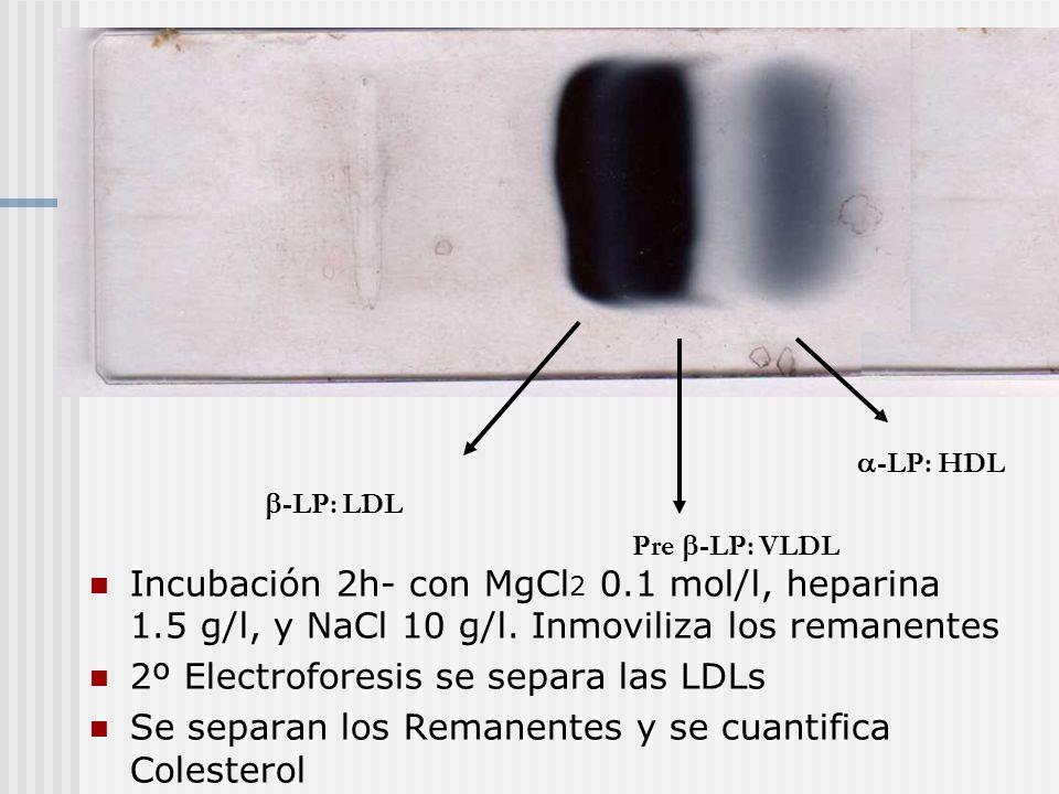 -LP: HDL Pre -LP: VLDL -LP: LDL Incubación 2h- con MgCl 2 0.1 mol/l, heparina 1.5 g/l, y NaCl 10 g/l. Inmoviliza los remanentes 2º Electroforesis se s