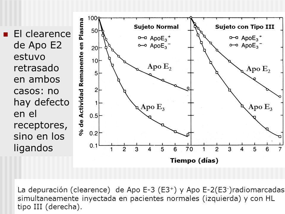 La depuración (clearence) de Apo E-3 (E3 + ) y Apo E-2(E3 - )radiomarcadas simultaneamente inyectada en pacientes normales (izquierda) y con HL tipo I