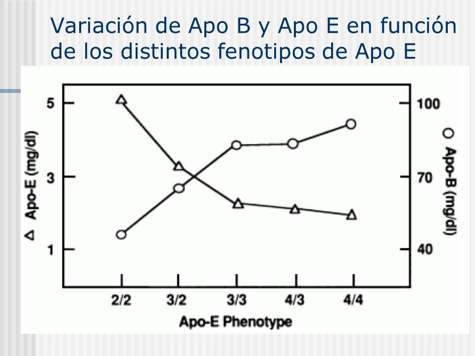 Variación de Apo B y Apo E en función de los distintos fenotipos de Apo E