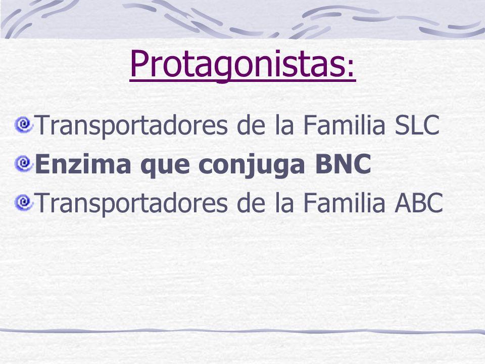 Protagonistas : Transportadores de la Familia SLC Enzima que conjuga BNC Transportadores de la Familia ABC