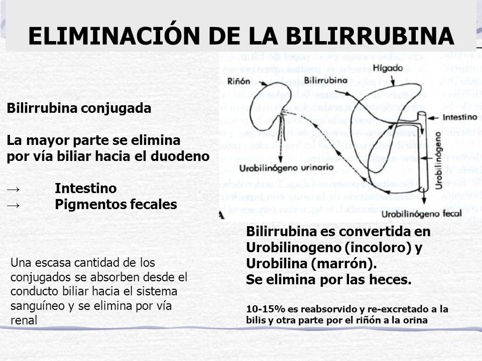 ELIMINACIÓN DE LA BILIRRUBINA Bilirrubina conjugada La mayor parte se elimina por vía biliar hacia el duodeno Intestino Pigmentos fecales Una escasa c