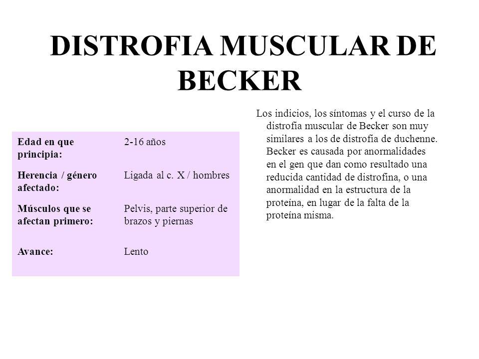 DISTROFIA MUSCULAR DE BECKER Los indicios, los síntomas y el curso de la distrofia muscular de Becker son muy similares a los de distrofia de duchenne
