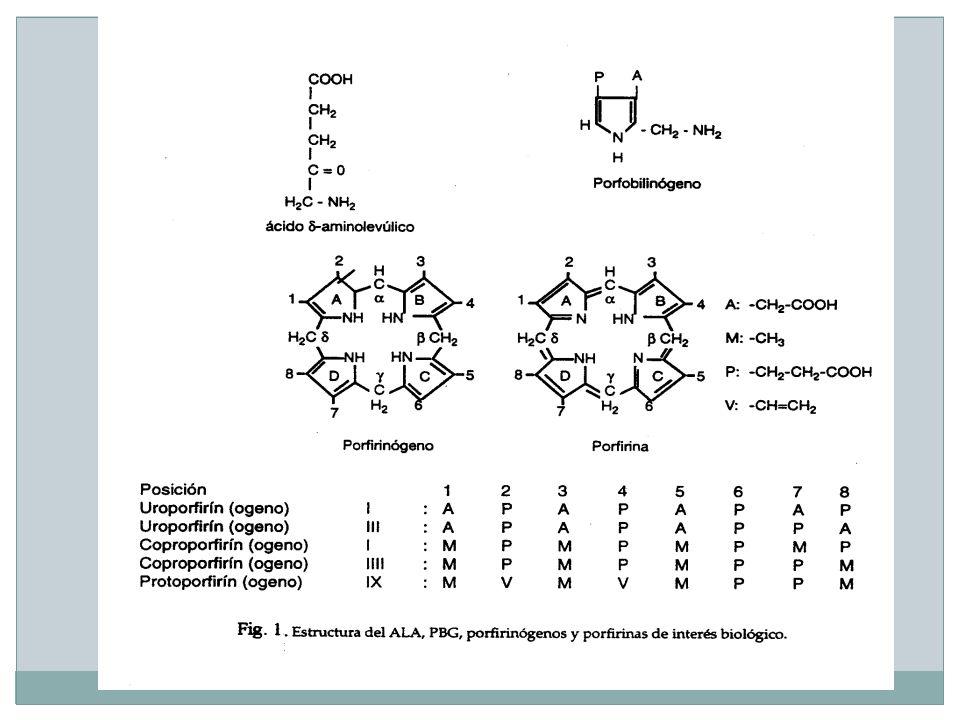 -Los porfirinógenos (con 4 puentes metilénicos reducidos) son los intermediarios normales en la célula.