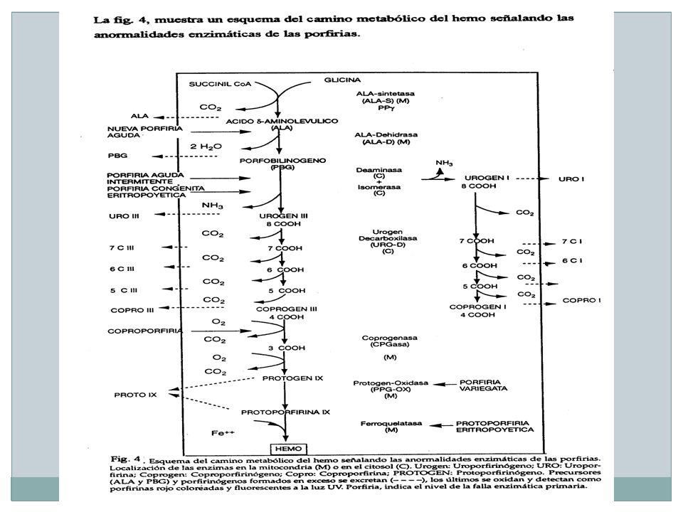 INDICACIONES FISIOPATOLOGICAS Acción sobre la ruta biosintética del hemo: Inosina, AMPHidratos de carbono Vitaminas - bloqueantes Coenzimas Hipertransfusión PABAHematina SAMeAcido fólico Acción orientada hacia la eliminación de porfirinas en las porfirias cutáneas: ColestiraminaPlasmaféresis Carbón activadoCloroquina Penicilina, EDTA, BALAcido cólico AlcalinizaciónHemoperfusión Acción orientada hacia la reducción de los depósitos corporales de hierro: Flebotomías SAMe Desferrioxamina