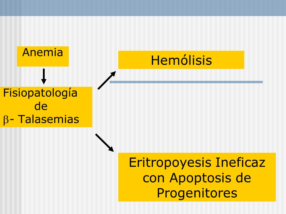 Fisiopatología de - Talasemias Hemólisis Eritropoyesis Ineficaz con Apoptosis de Progenitores Anemia