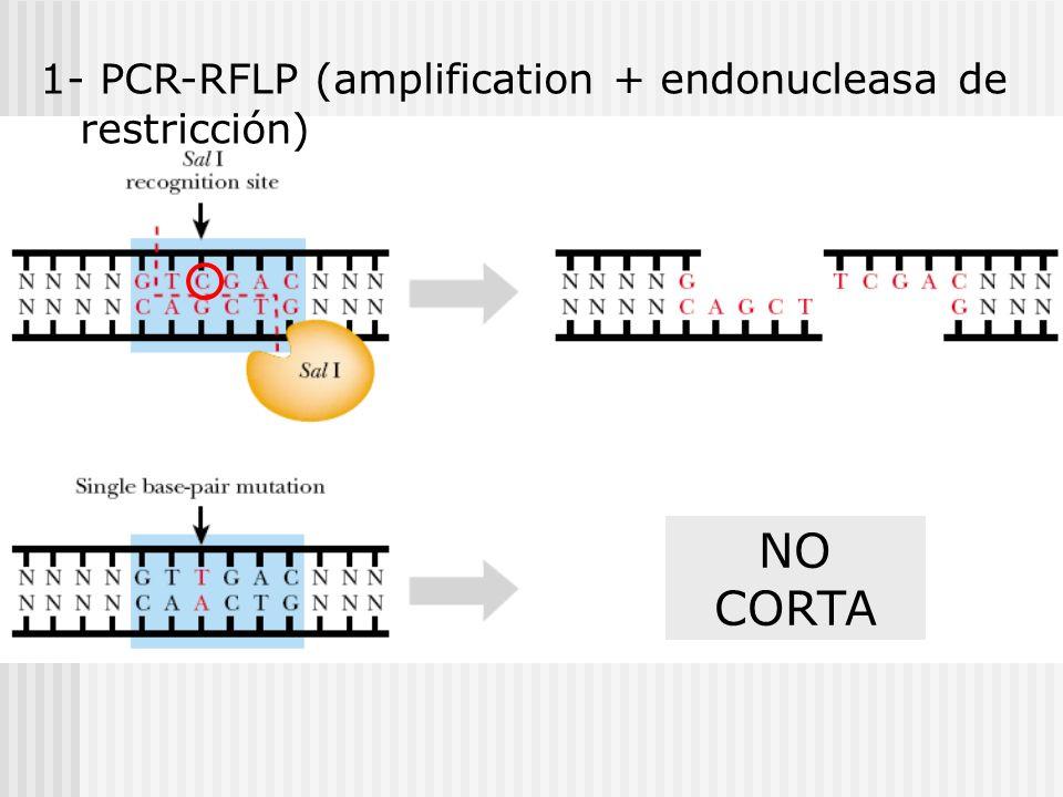 1- PCR-RFLP (amplification + endonucleasa de restricción) NO CORTA