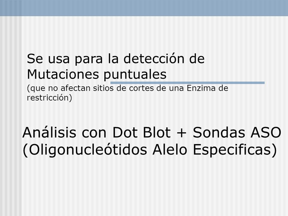 Se usa para la detección de Mutaciones puntuales (que no afectan sitios de cortes de una Enzima de restricción) Análisis con Dot Blot + Sondas ASO (Ol