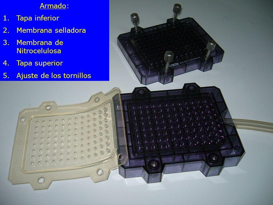 Armado: 1.Tapa inferior 2.Membrana selladora 3.Membrana de Nitrocelulosa 4.Tapa superior 5.Ajuste de los tornillos