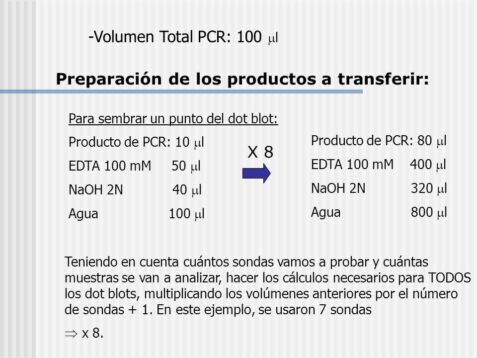 -Volumen Total PCR: 100 l Para sembrar un punto del dot blot: Producto de PCR: 10 l EDTA 100 mM 50 l NaOH 2N 40 l Agua 100 l Teniendo en cuenta cuánto