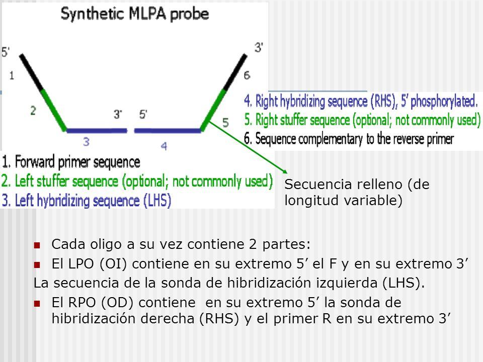 Cada oligo a su vez contiene 2 partes: El LPO (OI) contiene en su extremo 5 el F y en su extremo 3 La secuencia de la sonda de hibridización izquierda