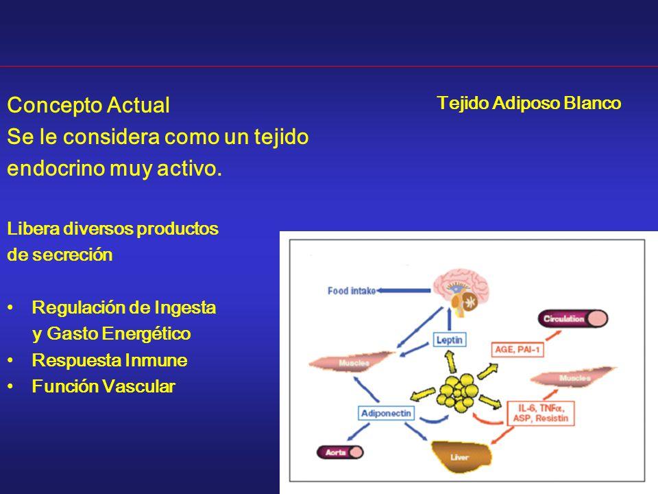 Concepto Actual Se le considera como un tejido endocrino muy activo. Libera diversos productos de secreción Regulación de Ingesta y Gasto Energético R