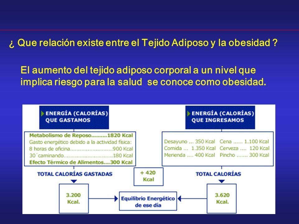 ¿ Que relación existe entre el Tejido Adiposo y la obesidad ? El aumento del tejido adiposo corporal a un nivel que implica riesgo para la salud se co