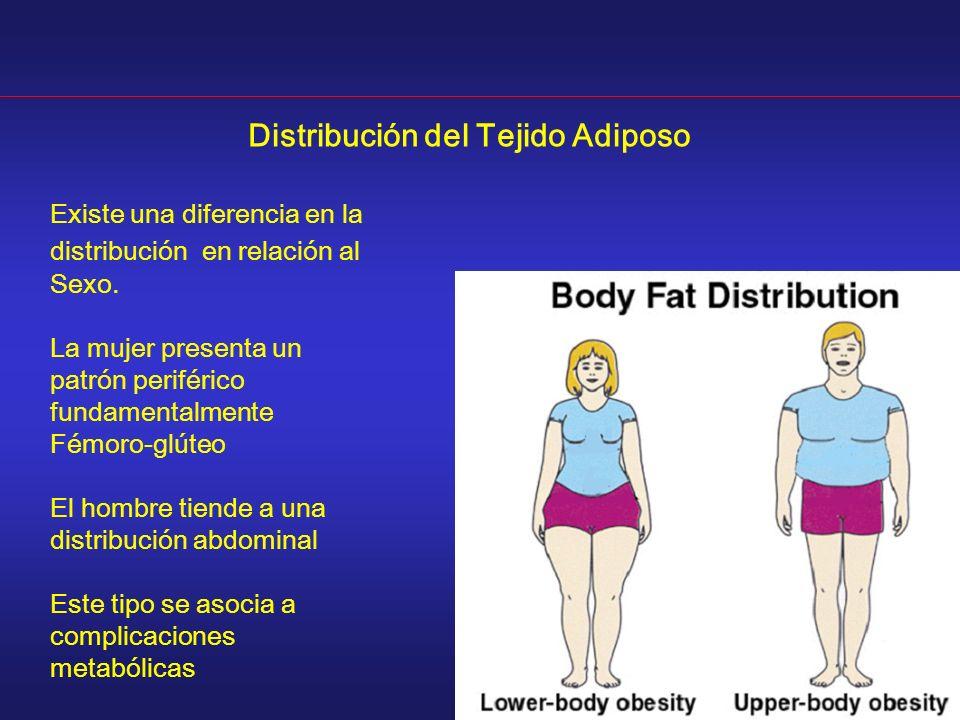 Distribución del Tejido Adiposo Existe una diferencia en la distribución en relación al Sexo. La mujer presenta un patrón periférico fundamentalmente