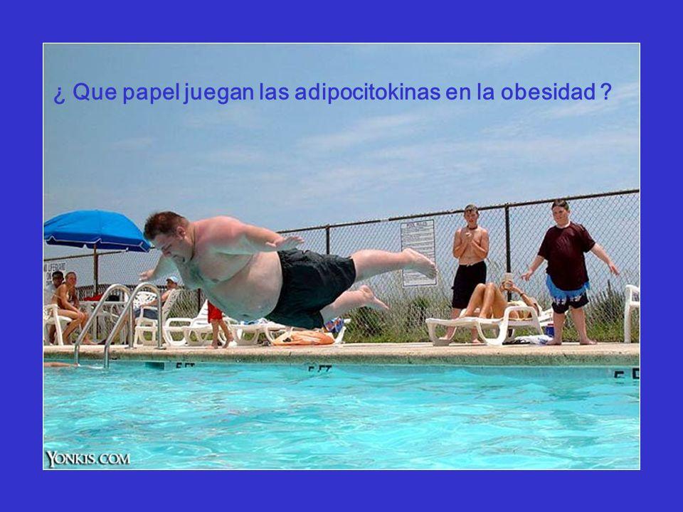 ¿ Que papel juegan las adipocitokinas en la obesidad ?