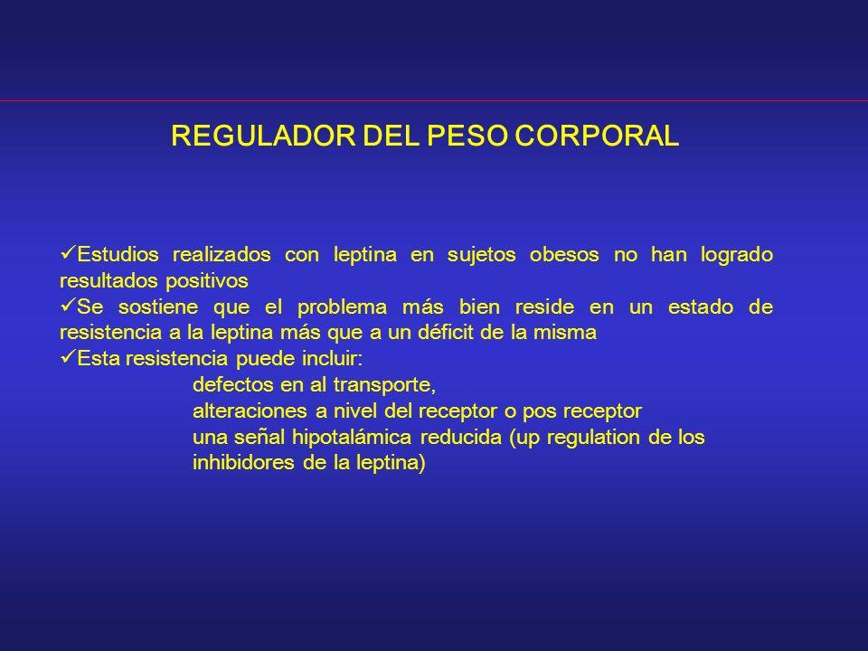 REGULADOR DEL PESO CORPORAL Estudios realizados con leptina en sujetos obesos no han logrado resultados positivos Se sostiene que el problema más bien