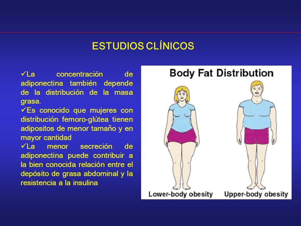 ESTUDIOS CLÍNICOS La concentración de adiponectina también depende de la distribución de la masa grasa. Es conocido que mujeres con distribución femor