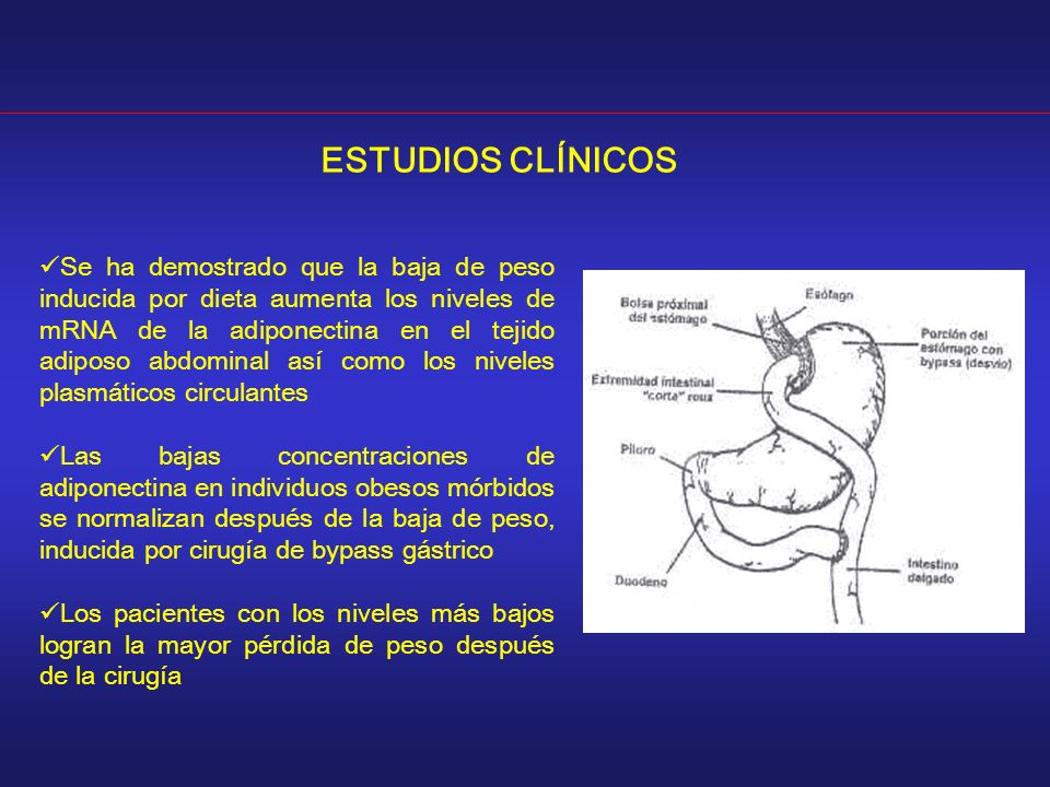 ESTUDIOS CLÍNICOS Se ha demostrado que la baja de peso inducida por dieta aumenta los niveles de mRNA de la adiponectina en el tejido adiposo abdomina