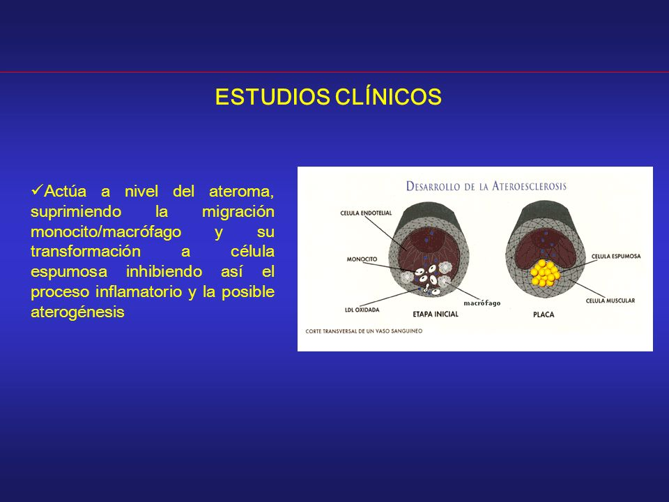 ESTUDIOS CLÍNICOS Actúa a nivel del ateroma, suprimiendo la migración monocito/macrófago y su transformación a célula espumosa inhibiendo así el proceso inflamatorio y la posible aterogénesis