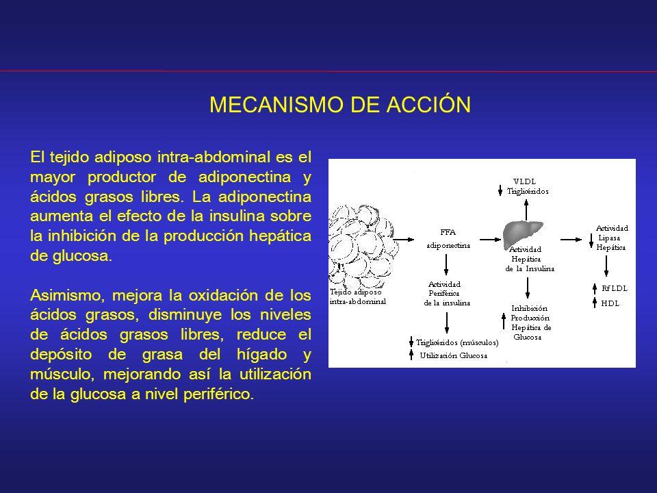 MECANISMO DE ACCIÓN El tejido adiposo intra-abdominal es el mayor productor de adiponectina y ácidos grasos libres. La adiponectina aumenta el efecto