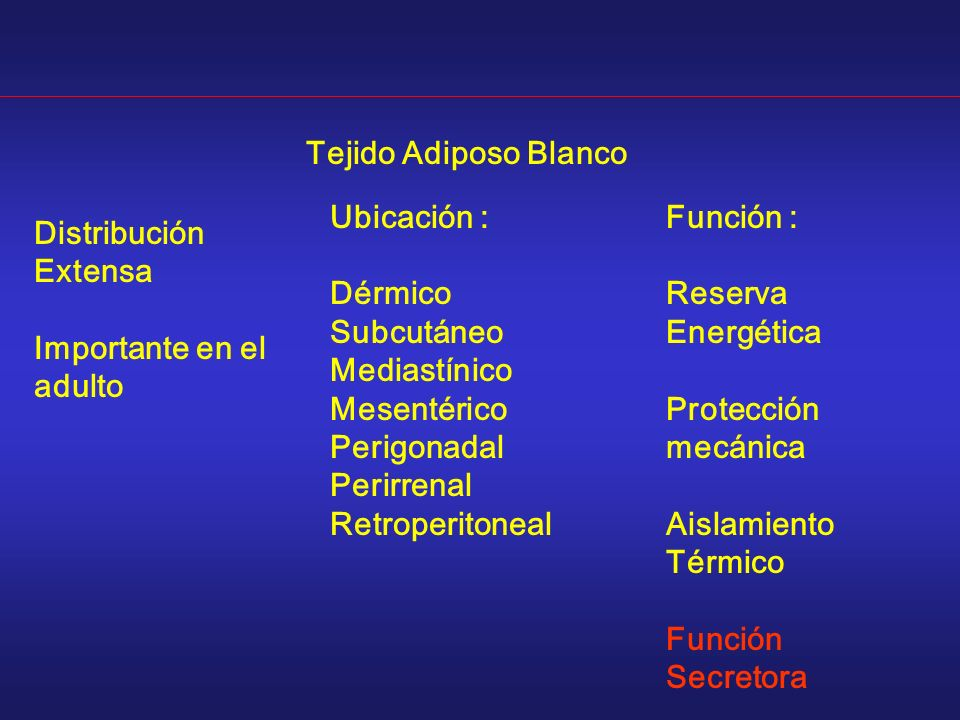 Distribución Extensa Importante en el adulto Tejido Adiposo Blanco Ubicación : Dérmico Subcutáneo Mediastínico Mesentérico Perigonadal Perirrenal Retr