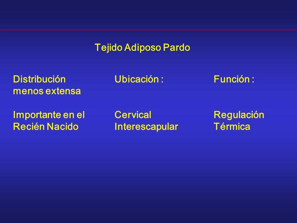 Distribución menos extensa Importante en el Recién Nacido Tejido Adiposo Pardo Ubicación : Cervical Interescapular Función : Regulación Térmica